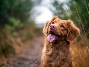 5 Things I've Learned Since Giving My Dog A CBD Tincture
